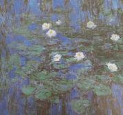 Nympheas bleus